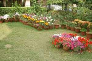 My Gardening